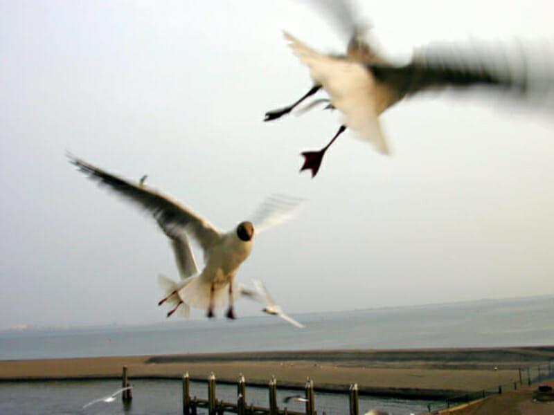 b2birds005